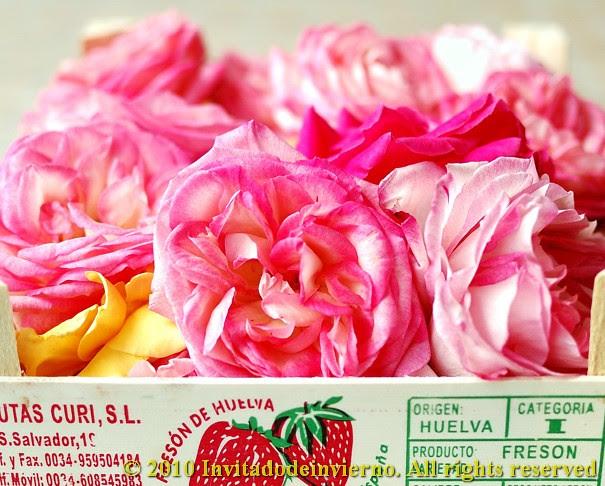 Rose petal sorbet 4