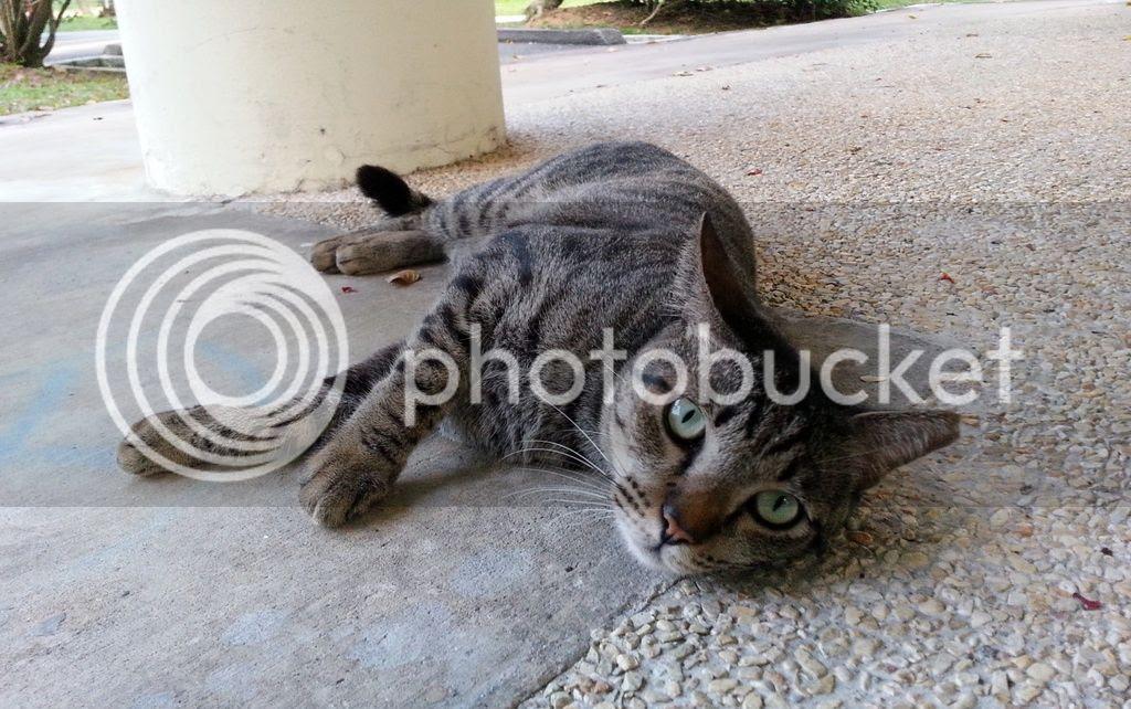 photo CatJRT17May01.jpg