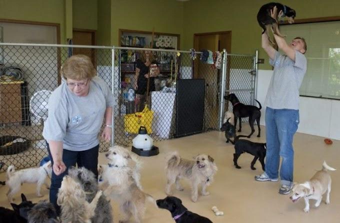 Cámaras de seguridad graban a una mujer robando comida donada para perritos una y otra vez