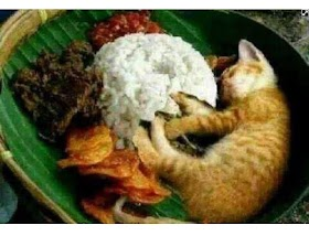 Kucing Lucu Lagi Makan