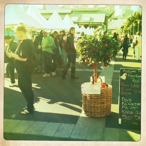 Growers' Market, Pyrmont