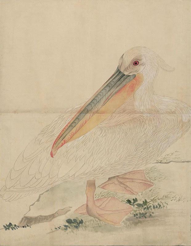 Ink + Watercolour  Bird sketch t