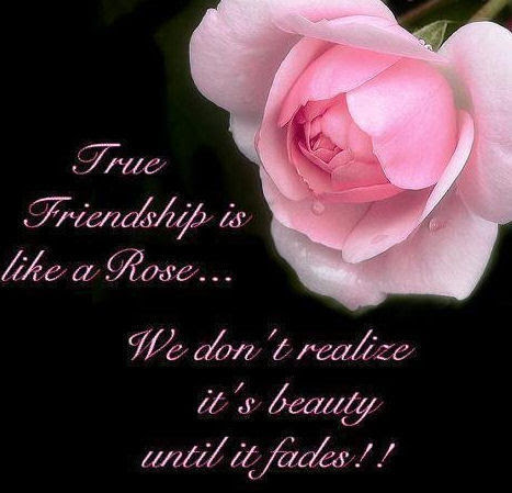 True Friendship Is Like A Rose Pictures Photos And Images For