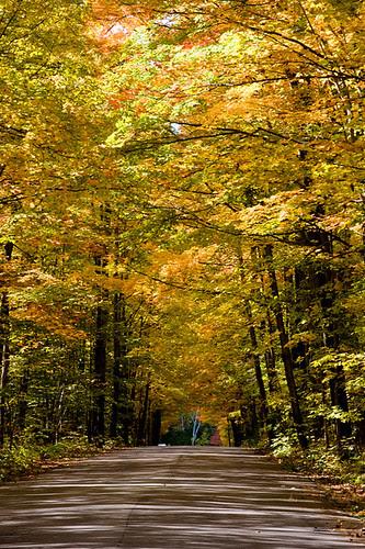 Orillia - Autumn Roads