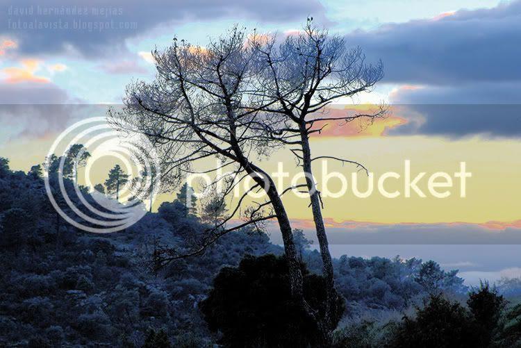 Paisaje con árboles de la sierra de Robledo de Chavela, Madrid
