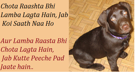 Funny Life Quotes And Sayings In Hindi Funny Love Quotes
