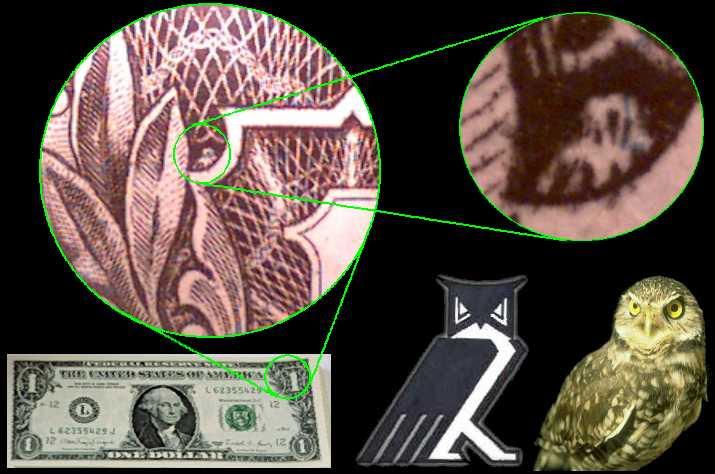 Hibou sur le dollar américain