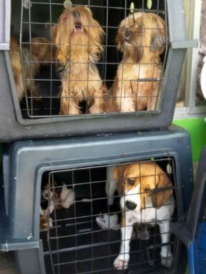 Cães estavam em gaiolas sujas, segundo a prefeitura (Foto: Divulgação/Prefeitura de Curitiba)