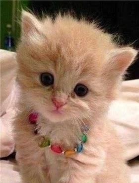 Kucing Lucu Cantik