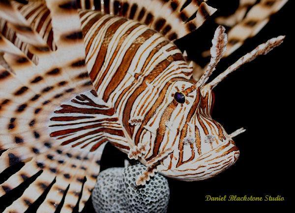 Marine life art and tropical fish carvings and marine life ...