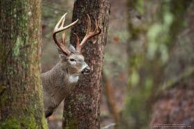 Professional Whitetail Deer Photography Matt Hansen