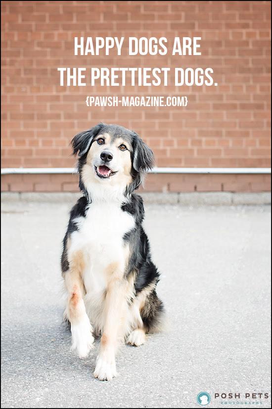 Dog Training Quotes Inspirational. QuotesGram