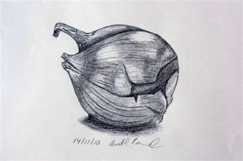 onion drawing graphite avital pinnick flickr