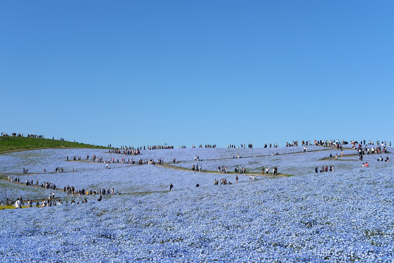 photo Hitachi Seaside Park Ibaraki Japan 1.jpg
