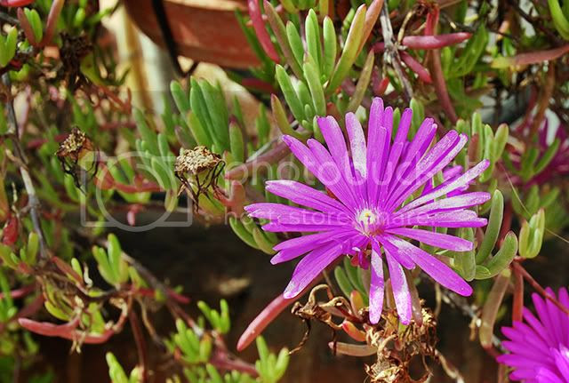 Fresh Spring Flowers Online From Barcelona, Spain