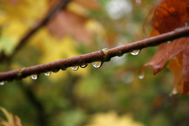 raindrops, riverside park
