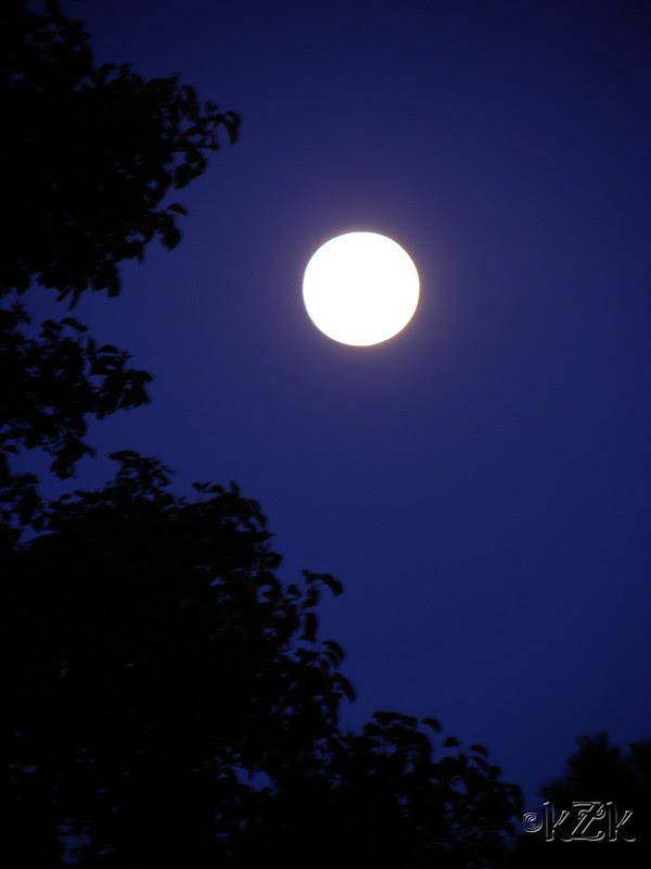 DSCN4276 AUG 2012 blue moon