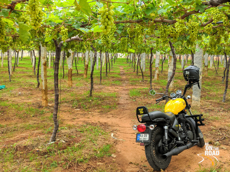 My Custom Motorcycle at a vineyard in Rural Chikkaballapur, Karnataka