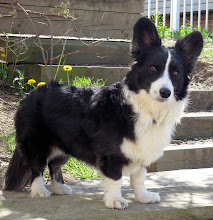 Moxie Dog