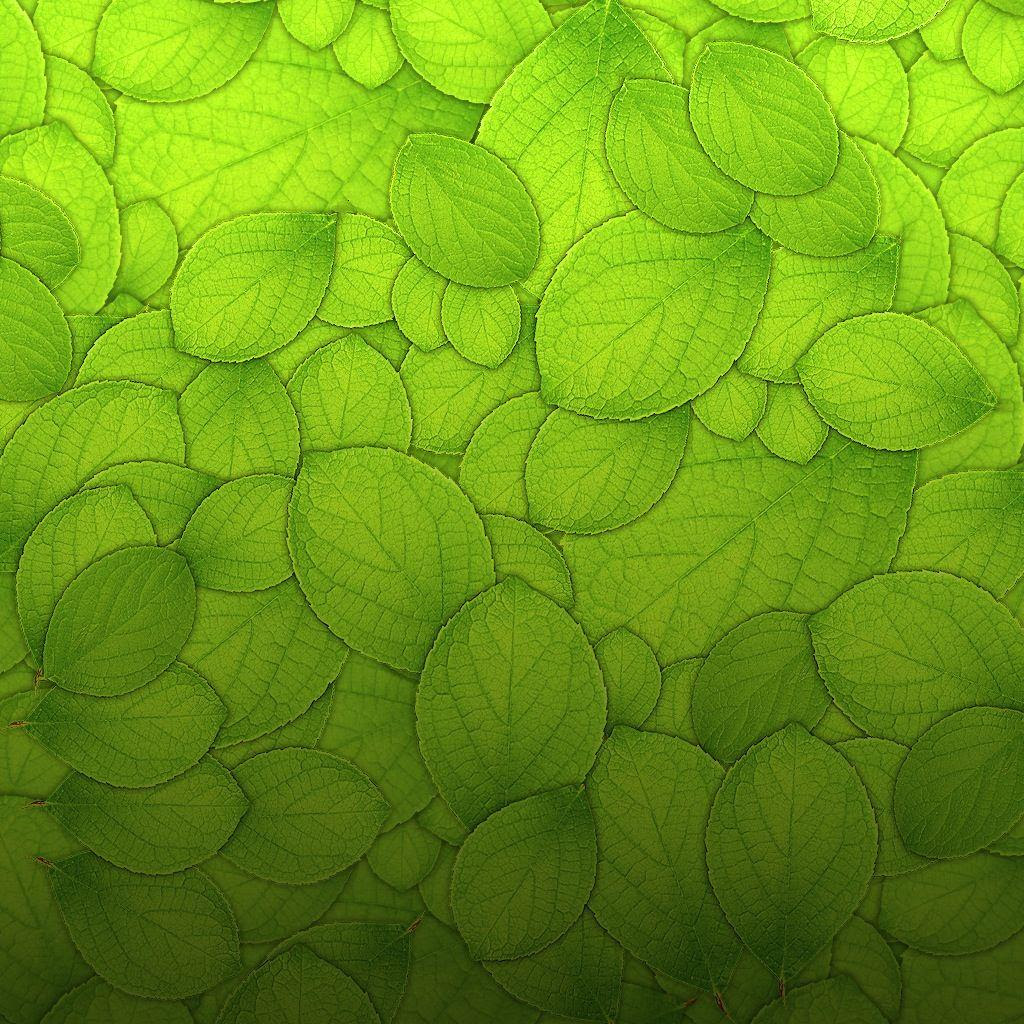 25 Best Ideas About Leaves Wallpaper On Pinterest Palm 1