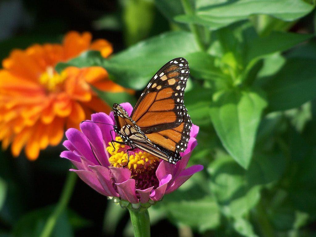 Desktop Backgrounds Butterflies - Wallpaper Cave