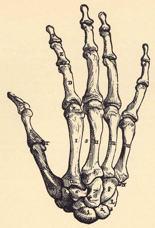 Skeleton Hand Drawing Tumblr At Getdrawingscom Free For Personal