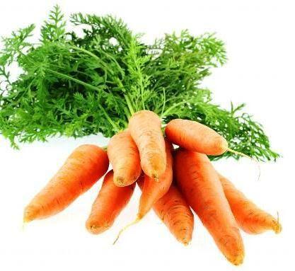 """Résultat de recherche d'images pour """"fanes de carotte"""""""