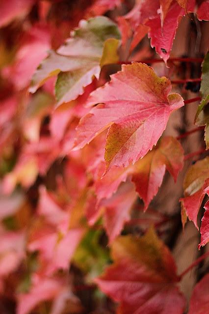Autumn20125