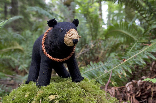 coastal black bear