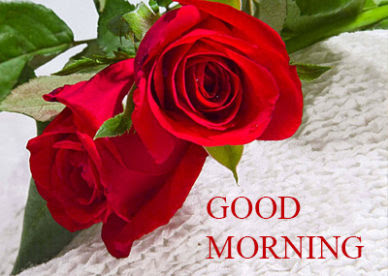 Good Morning Romantic Rose Free Download Good Morning Images