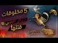 المخلوقات التي حرم الله قتلها - خمسة حيوانات نهانا رسول الله صلى الله عليه وسلم عن قتلها !!!