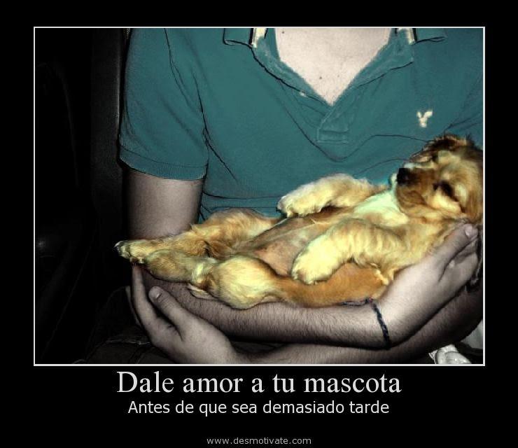Dale Amor A Tu Mascota Desmotivate Com Frases Y Pensamientos De
