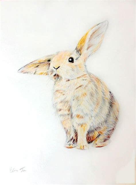original colored pencil drawing fluffy bunny animal art