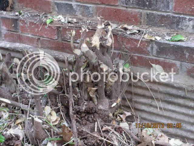 Stump after cutting down vine on chimney photo IMG_0334_zpscb0e1f98.jpg