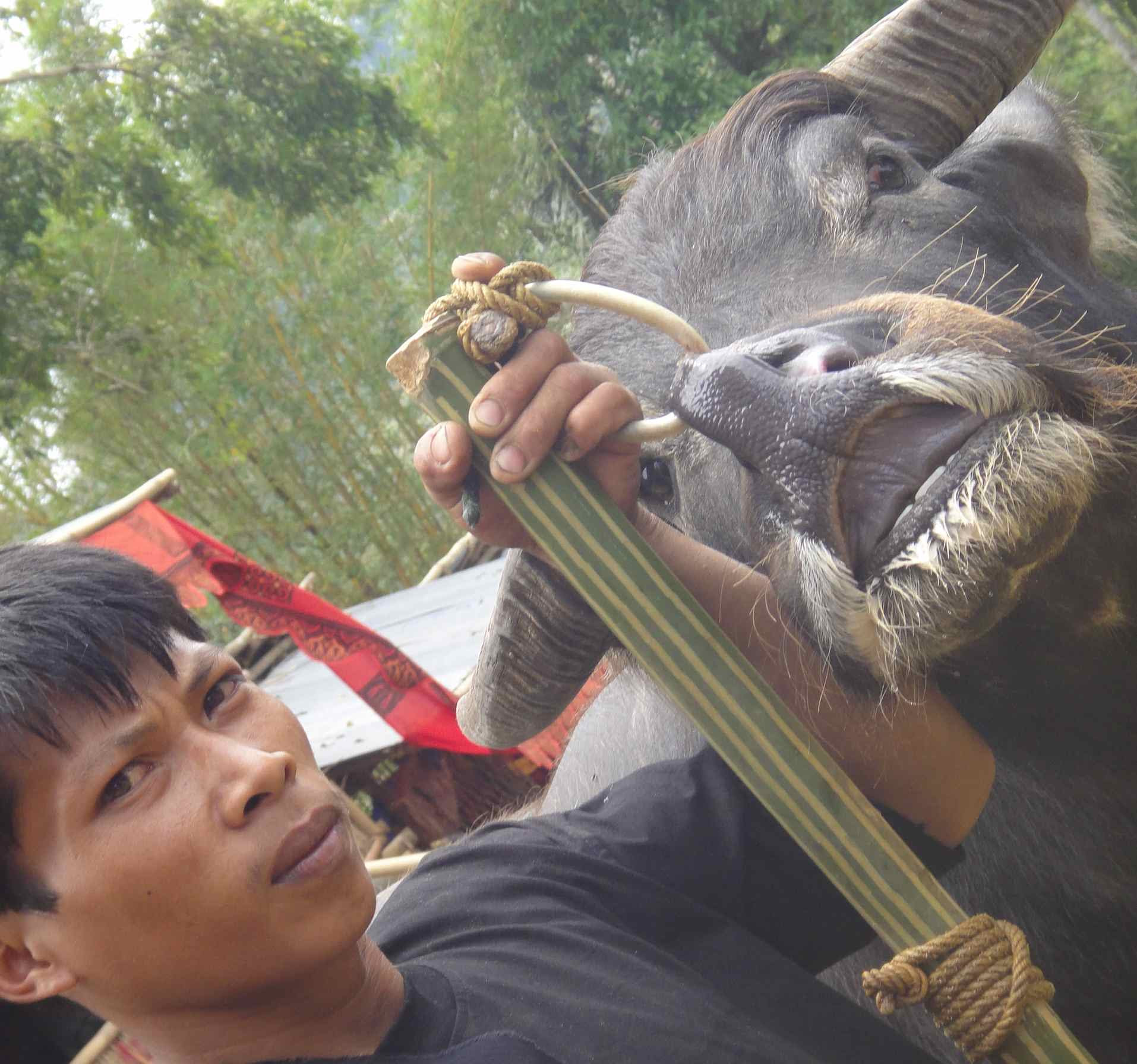 Buffalo Soldiers Living For Death In The Tana Toraja Escapeartistes