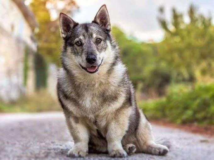 Las cinco razas de perros más exóticos que existen