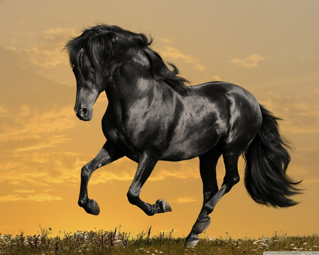 Animal Black Horse Background Image Hd Desktop Wallpapers Wide Images, Photos, Reviews