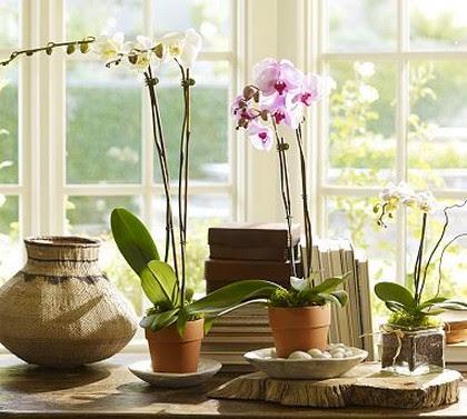 Resultado de imagem para orquideas na decoração