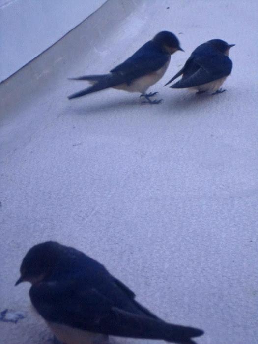 birds 012