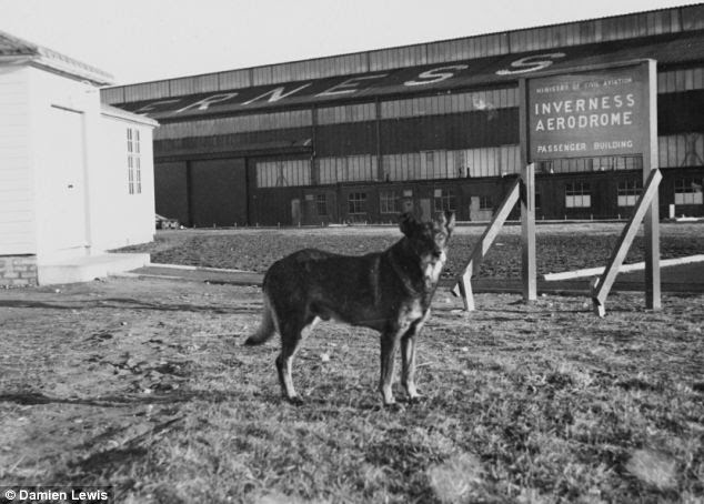Dog days on the base: By the time C for Cecilia, the veteran Wellington bomber, was shot down over Berlin, Antis and his owner Robert Bozdech had been posted to a training squadron near Inverness
