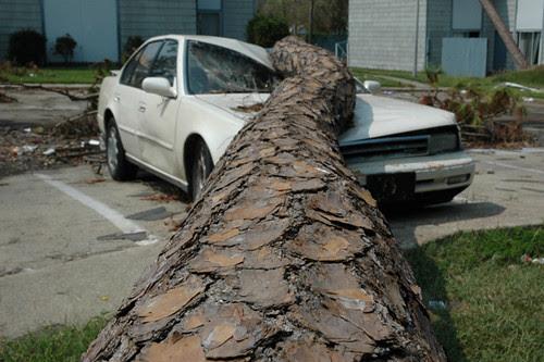 tree on car9-1web copy