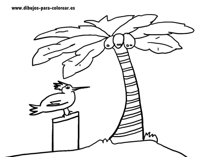 Los Cocos Y La Palmera Dibujos Para Colorear