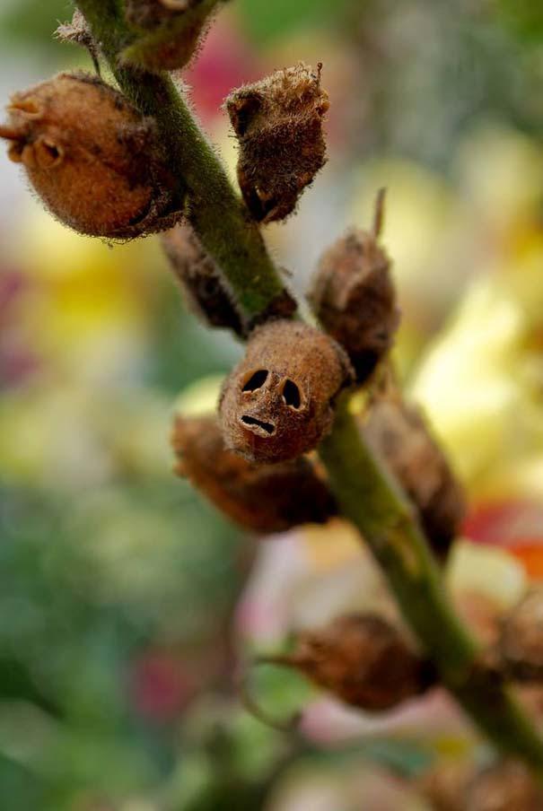 Το τρομακτικό εσωτερικό ενός όμορφου λουλουδιού (14)