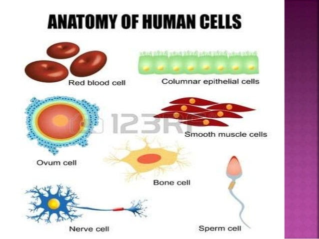types of cells in the body class 8 4 638