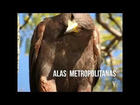 Vídeo: Día Mundial de las Aves Migratorias