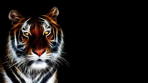 cool wallpapers  tigers  images