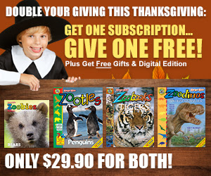 300x250 Thanksgiving Special - Ends November 29th