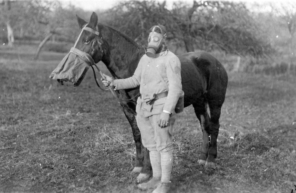 Os animais também lutaram na Primeira Guerra Mundial 25