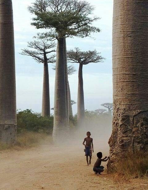 trees, baobob and kids