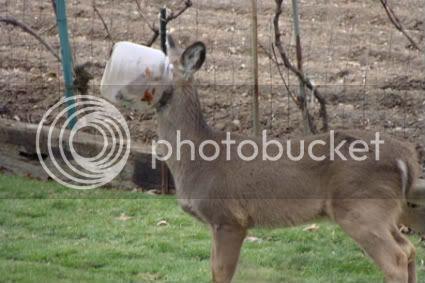 Bucket Head Deer